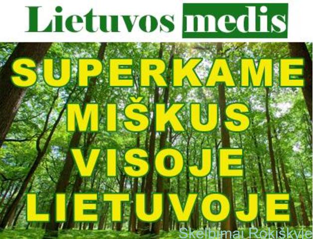"""""""Lietuvos medis"""" brangiai perka mišką  visoje Lietuvoje"""