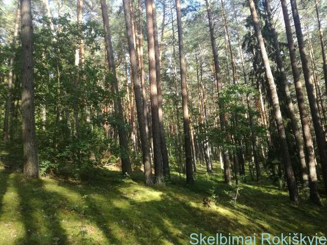 Gauk geriausią miško kainą 864404447
